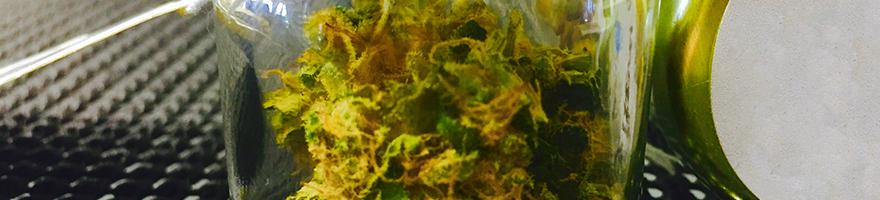 Cannabis Store Bellingham